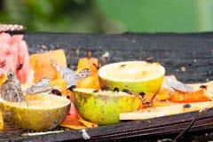 Insectos que alimentan en la fruta Imagenes de archivo