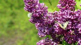 Insectos que chupan el néctar en flores almacen de metraje de vídeo