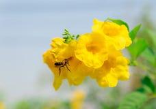 Insectos que comen el néctar en flores y naturaleza foto de archivo libre de regalías