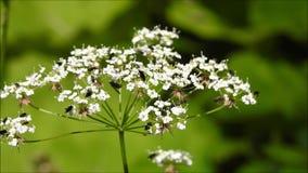 Insectos que suben en una planta almacen de video