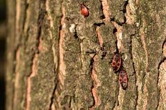 Insectos rojos Imagenes de archivo