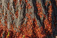 Insectos rojos Fotos de archivo