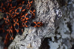 Insectos rojos Fotografía de archivo libre de regalías