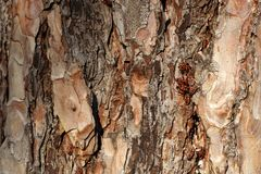 Insectos rojos en una estructura de madera Imagen de archivo libre de regalías