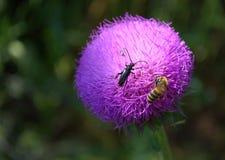 Insectos rosados de la flor Imágenes de archivo libres de regalías