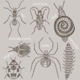 insectos Siete insectos Foto de archivo