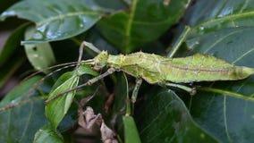 Insectos tropicales exóticos en el terrario de Tailandia Insectos de Asia almacen de metraje de vídeo