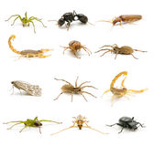 Insectos y arácnidos Imagenes de archivo