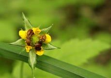 Insectos y flor Foto de archivo libre de regalías