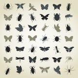 insects4的汇集 免版税库存图片