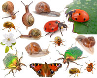 Insects. Set of Insects, isolated on white background Royalty Free Stock Photo