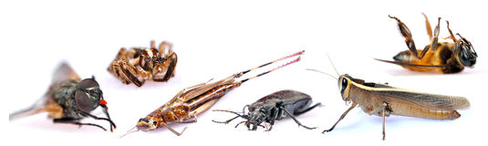 Insects. Different insects isolated on white background Royalty Free Stock Images