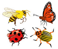 Insects. Set of different colorful insects Stock Photos