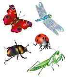 Insects. Butterfly, dragonfly, locust, bug, ladybird, nature illustration Stock Image