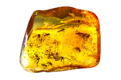 Insects In Amber. Royalty Free Stock Photos