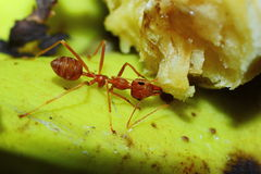 Insects, ants Stock Photo