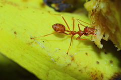 Insects, ants Stock Image