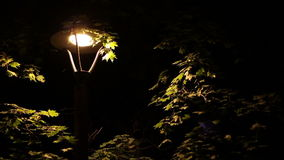 Insects Around Street Lamp stock footage