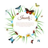 Insects Background Illustration Royalty Free Stock Photos