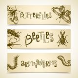 Insects banner set Stock Photo