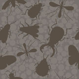 Insects. Bee. Beetles. Mosquito. Stock Photo