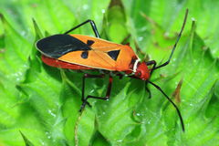 Insects on a bright orange Stock Photography