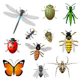 Insects and bugs. Set of 11 pieces Stock Image