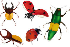 Insects bugs ladybirds. Wood bug Stock Photos