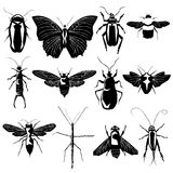 Insects and bugs in vector silhouette. Detailed vector silhouettes of a variety of bugs and insects, including bees, ants, roaches, butterflies, moths, and Royalty Free Stock Images