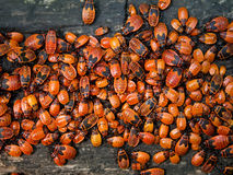 Insects bugs wood Stock Image