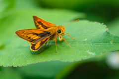 Insects, butterfly, moths,bug. royalty free stock images