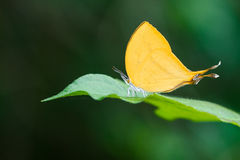 Insects, butterfly, moths,bug. stock photos