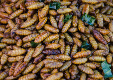 Insects caterpillars. Stock Image