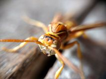 Insects. Closeup face Royalty Free Stock Photography