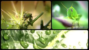 Insects, collage stock video