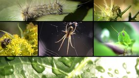 Insects, collage. Various insects in the wild, collage stock video
