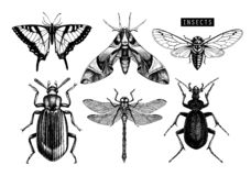 Vector collection of hand drawn insects illustrations. Black butterflies, cicada, beetle, bug, dragonfly drawing. Entomological sk. Etch set stock illustration