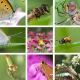 Insects collection Royalty Free Stock Photos