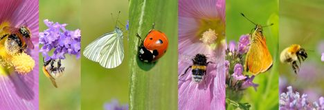 Insects Collection On Flowers In Summer Stock Photos