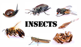 Insects Royalty Free Stock Photography