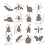 Insects. Contour image. Stock Photography
