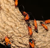 Insects Stock Images