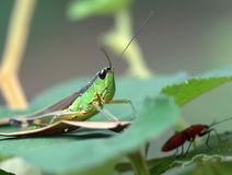 Insects Stock Photography