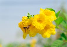 Insects eating nectar in flowers and nature royalty free stock photo