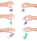 Insects in a female hand, isolated Royalty Free Stock Photo