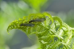 Insects on fern royalty free stock photos