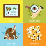 Insects Flat Set Stock Images