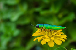 Insects on flowers Stock Photography