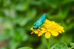 Insects on flowers Royalty Free Stock Images
