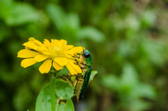 Insects and Flowers Stock Photos